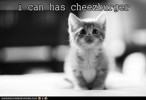 Cheezburger Image 6427750656