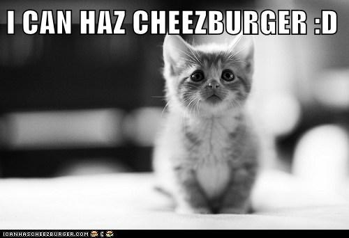 Cheezburger Image 6427775488