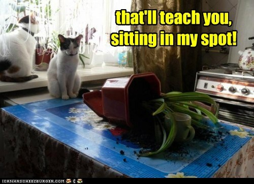 captions,Cats,destroy,knock over,plant,revenge,sit,spot