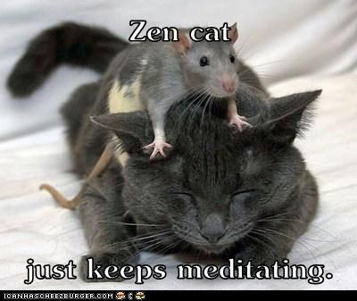annoyed cat climbing closed eyes crawling distraction Hall of Fame meditating mouse zen - 6428036352