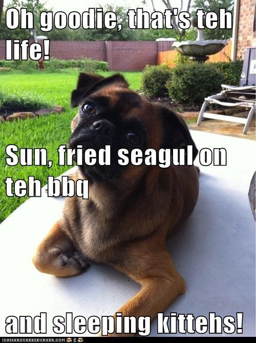 Cheezburger Image 6428074240