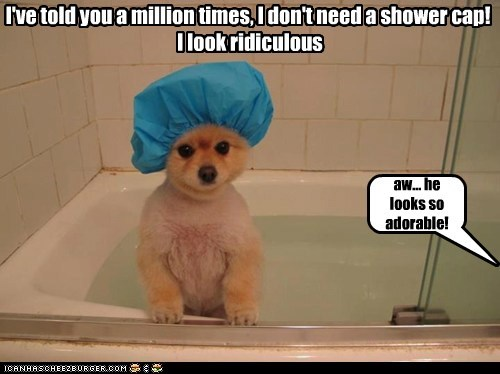 I've told you a million times, I don't need a shower cap! I look ridiculous aw... he looks so adorable!