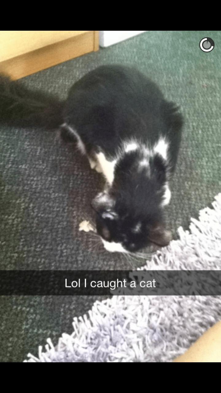 list cute Cats funny - 642821