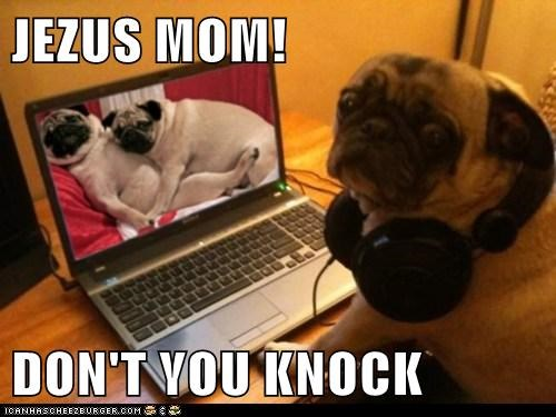 captions,computer,dogs,getting caught,laptop,mom,porn site,pug