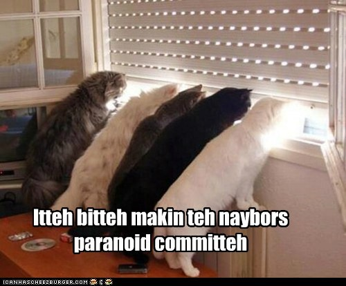 captions Cats creepy itty bitty kitty committe itty bitty kitty committee paranoia stare window - 6428916992