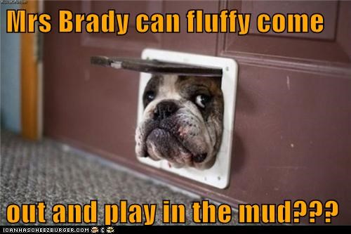 bulldog,come out and play,dogs,doggie door,too big