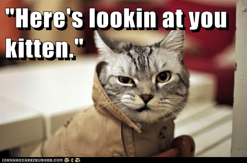 captions,casablanca,Cats,classic movie,film,Movie,reference,smirk