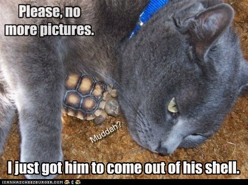 adopted baby captions Cats child mom pictures shy tortoise turtle - 6429210112