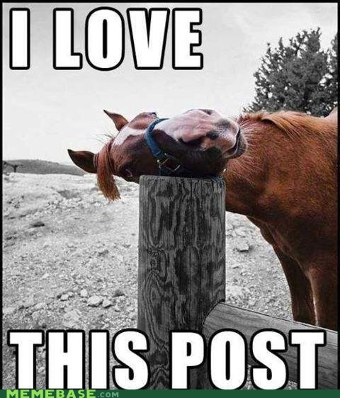 horse i love Memes this-isnt-4chan this post what - 6429293312