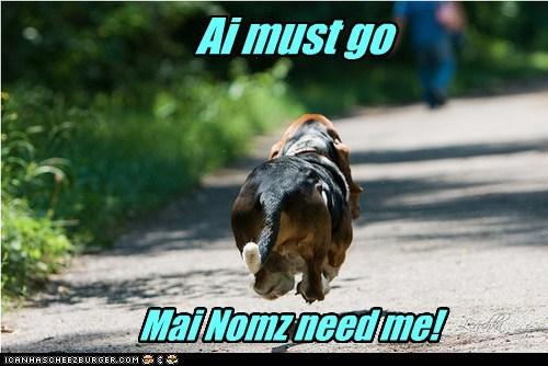 bassett hound dogs hover dog i must go nomz - 6429392384