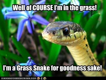 duh,grass snake,of course,snake,snake in the grass