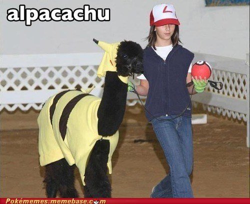 alpaca,alpacachu,alpacas,best of week,cosplay,costume,IRL,Pokémemes,Pokémon,portmanteus