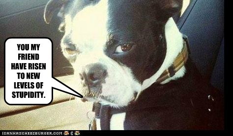 best of the week boston terrier car dogs Hall of Fame skeptical dog stupidity