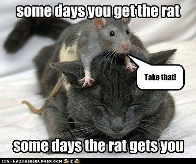 bad day,bears,cat,mouse,rat,some days,take that