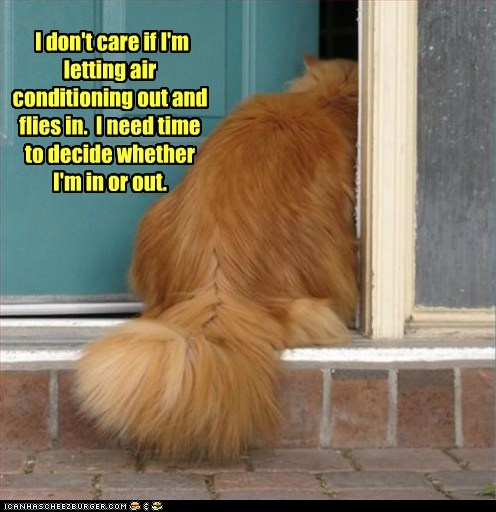 ac,air conditioning,best of the week,captions,Cats,door,in,make up your mind,out