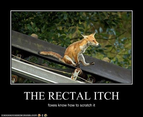 THE RECTAL ITCH foxes know how to scratch it