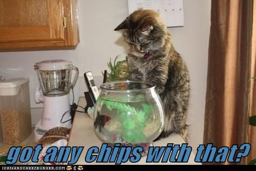 captions Cats dinner fish fish and chips food hungry nom - 6430703872