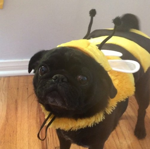 funny pet costumes for halloween