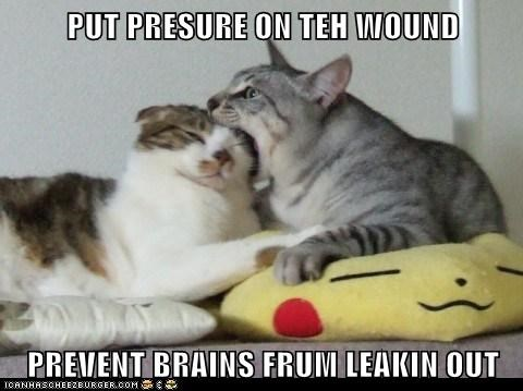 PUT PRESURE ON TEH WOUND PREVENT BRAINS FRUM LEAKIN OUT