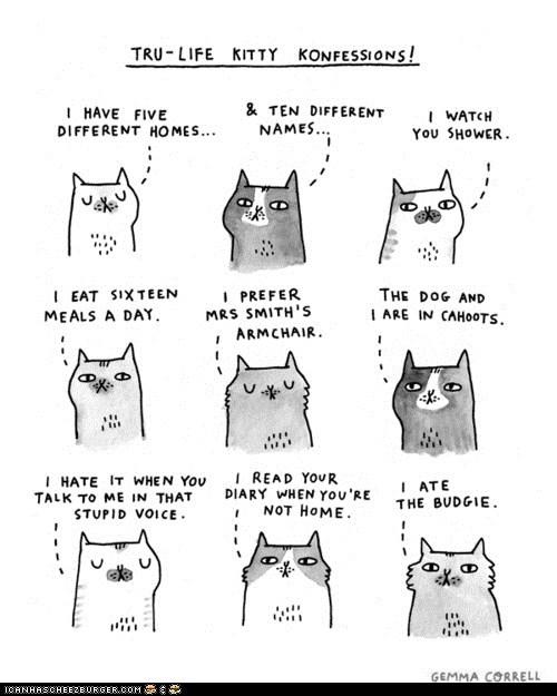 Cats,confessions,gemma correll,illustraions