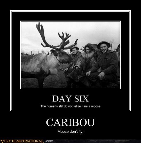 CARIBOU Moose don't fly.