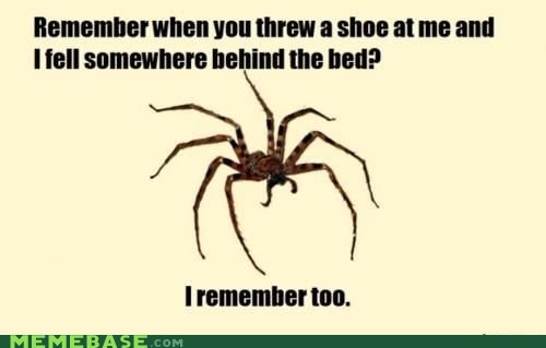 bed,Memes,memory,remember,shoe,spider,spiders