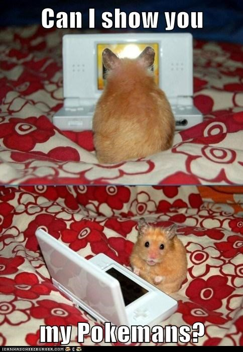 captions hamster let me show you them nintendo ds Pokémans Pokémon - 6431134976