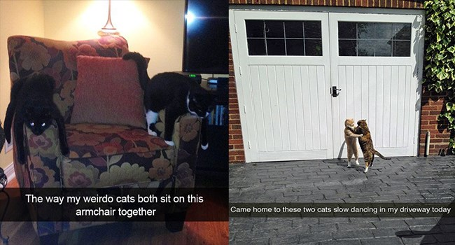 snapchats of cats doing their funny thing