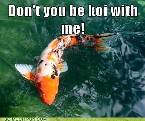 coy,double meaning,fish,homophone,koi,literalism,reprimand