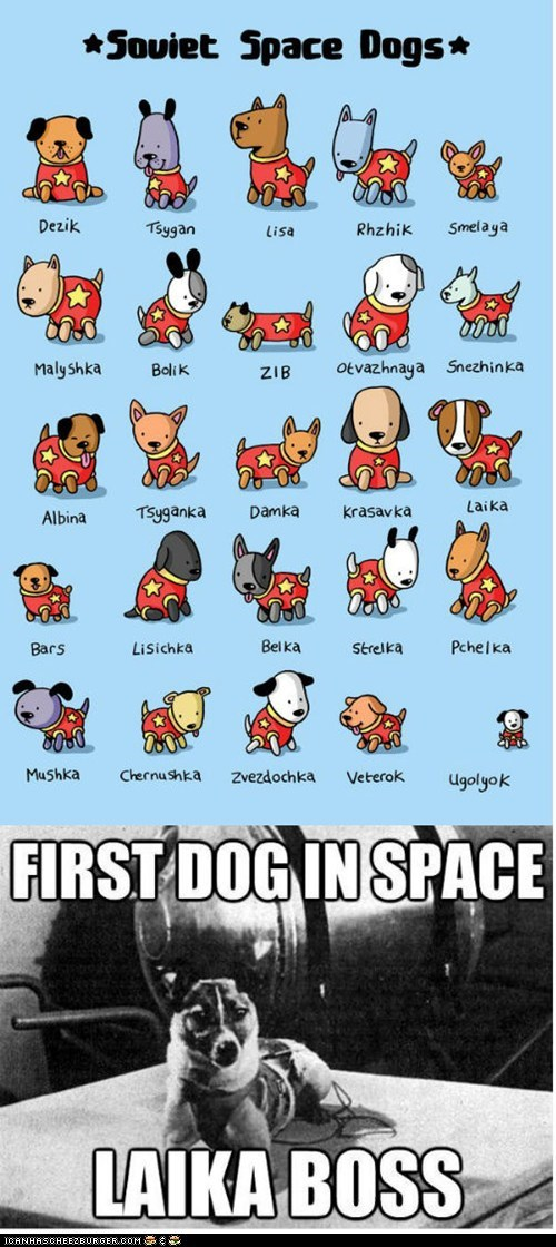 dogs illustrations laika puns Soviet Russia space space dogs space travel - 6431345152