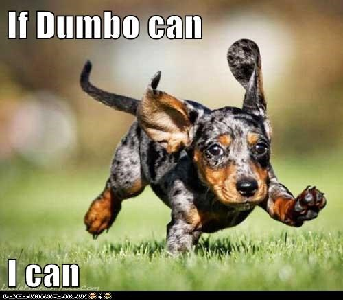 big ears,dachshund,dogs,dumbo,flying