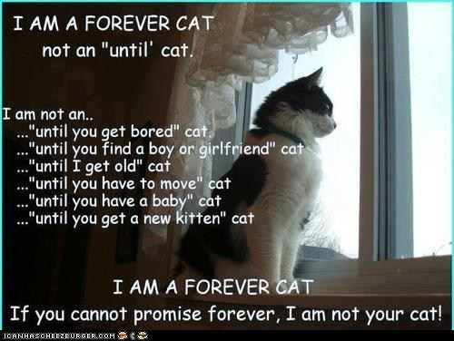 best of the week Cats cute forever forever home kindness pets psa sweet - 6431519488
