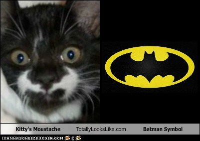 bat symbol,batman,Cats,look alikes,moustaches,totally looks like