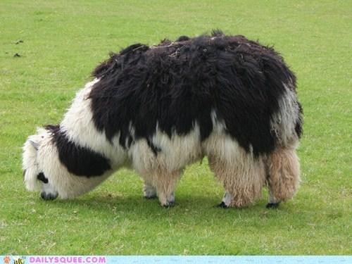 alpaca floofy squee spree wool - 6431705856