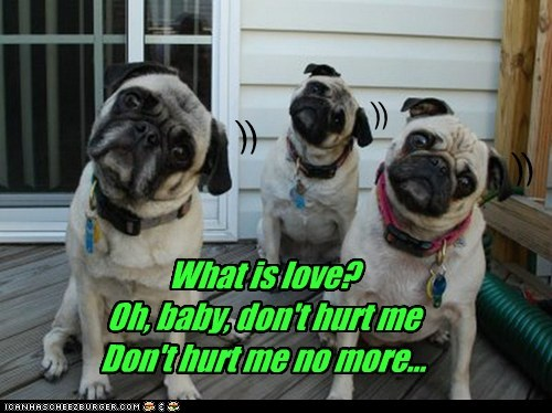 captions dogs music-dance pug roxbury what is love