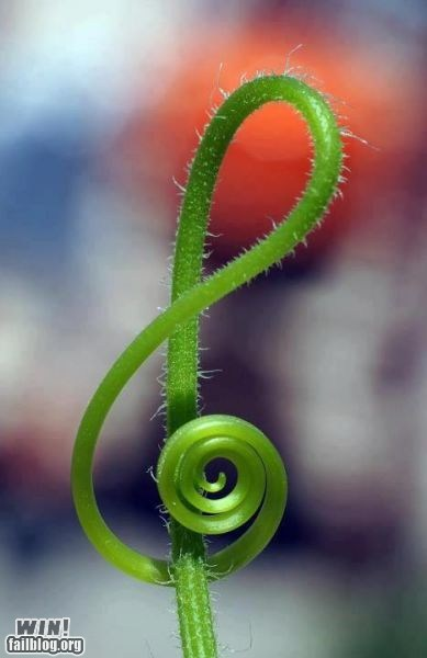design Music plant treble clef - 6431844608