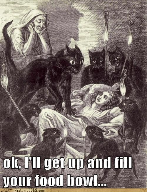 black,Cats,demons,feed me,morning,wake up