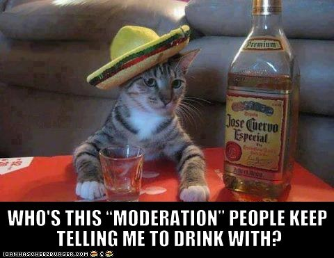 alcohol captions Cats drinking drunk lolcats moderation tequila - 6431908608