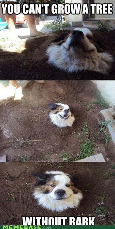 bark dogs Memes puns tree - 6432171776