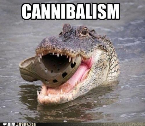 alligator,best of the week,cannibalism,captions,crocodile,crocs,eating,Hall of Fame,puns,shoe