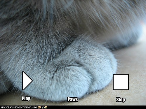 captions Cats ipod listen Music paws play pun stop