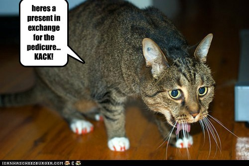captions Cats cough hairball nails pedicure revenge - 6432355584