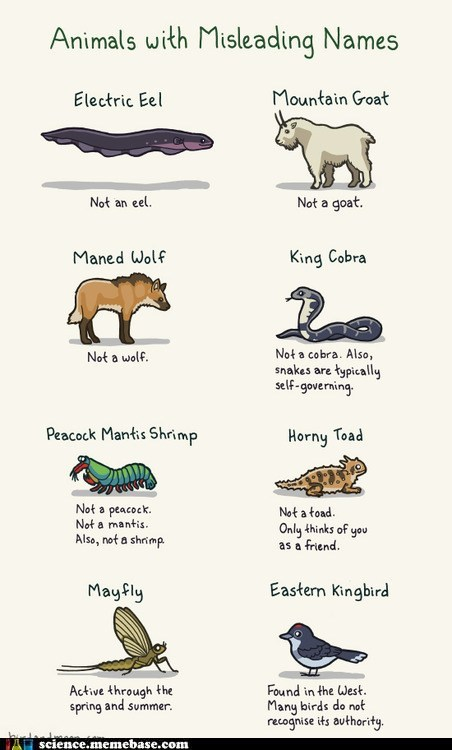 animals Memes names wtf - 6433042944