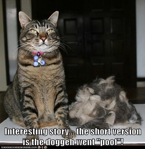 captions Cats fur magic poof story vanish - 6433543680