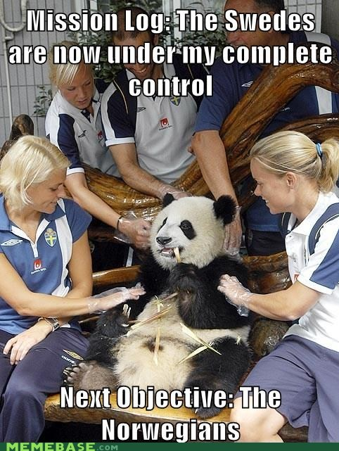 Bad Pickup Line,Bad Pickup Line Panda,Norway,panda,scandanavia,Sweden