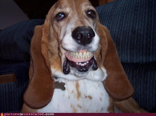 creepypasta smile dog teeth wtf - 6433817856