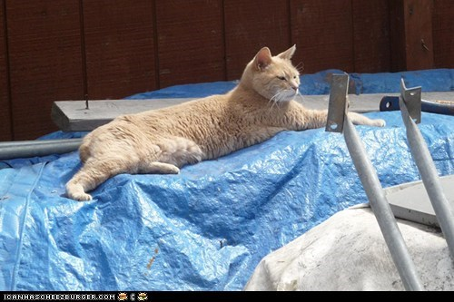 alaska around the interwebs Cats mayor people pets stubbs talkeetna - 6433908480