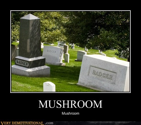 badger,hilarious,mushroom,song