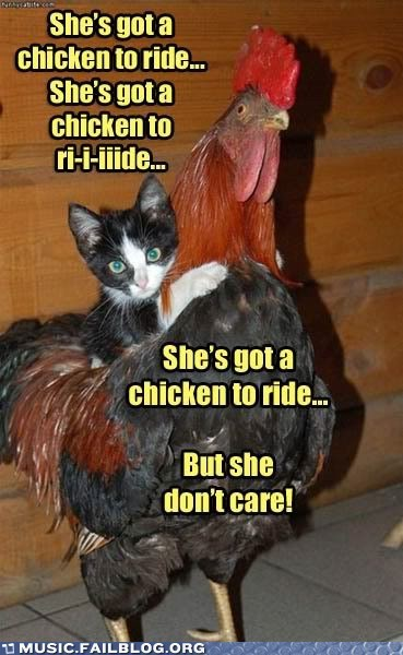 beatles,cat,chicken,rooster,the Beatles,ticket to ride