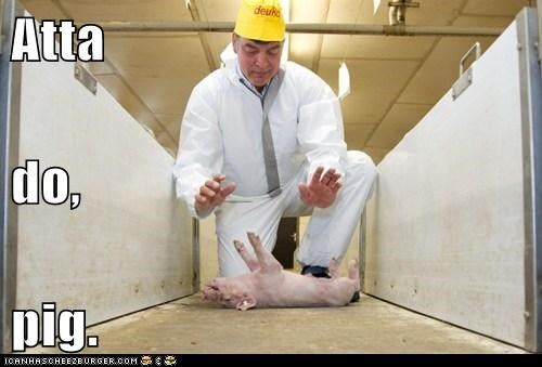 animals babe pig political pictures - 6434053120